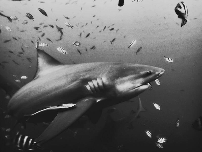 Malin Victoria Fiji underwater shark dive euphoric threads